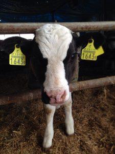 牛農家を知る!♯牛農家の違い