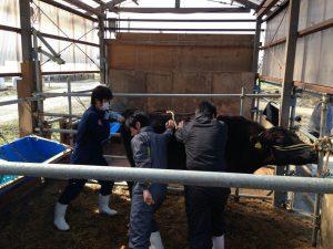 牛・家畜人工授精師②受験資格・方法
